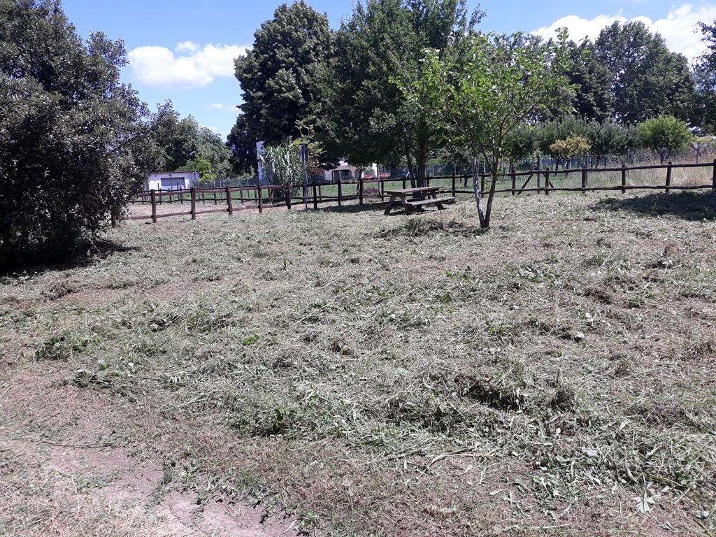 Volunteer Report Ponte Buriano June 2018